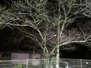 桜夜景〜20131115