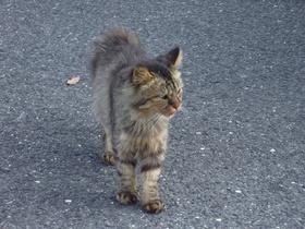 伊万里猫〜20121011-1012