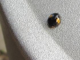 天道虫〜20130521