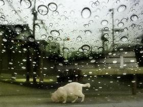 猫〜20130611
