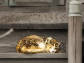 猫〜20131020-1021