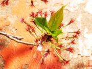 花祭〜20130408